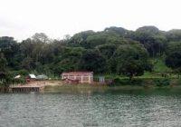 Idjwi : Une ONG plaide pour la cessation d'abatages d'arbres sur l'ïle