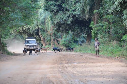 Trafic sur la route Bukavu-Kamituga : Les passagers pillés et délaissés nus par des hommes armés