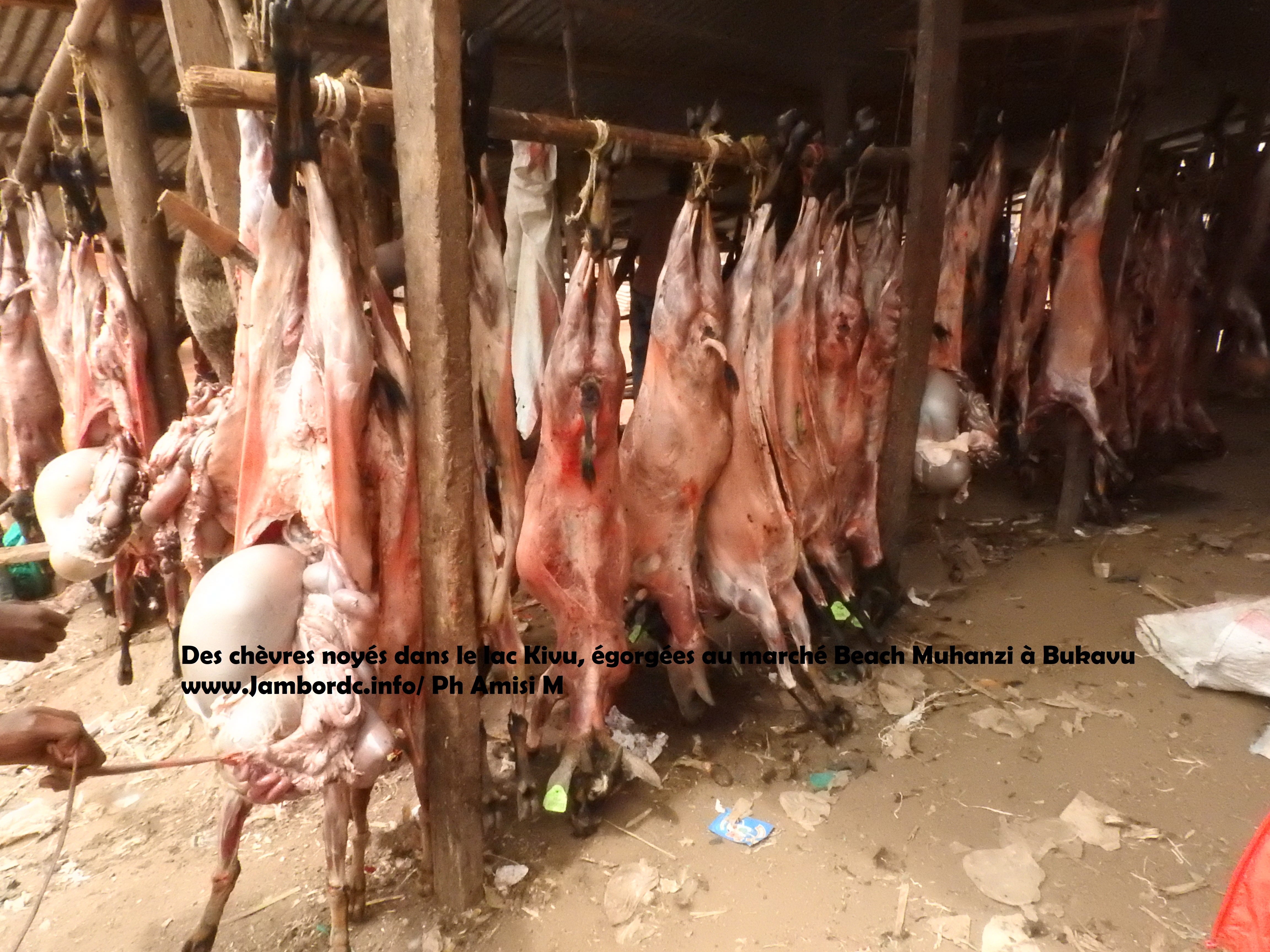 Bukavu : 110 chèvres et 9 porcs noyés et repêchés dans le lac Kivu