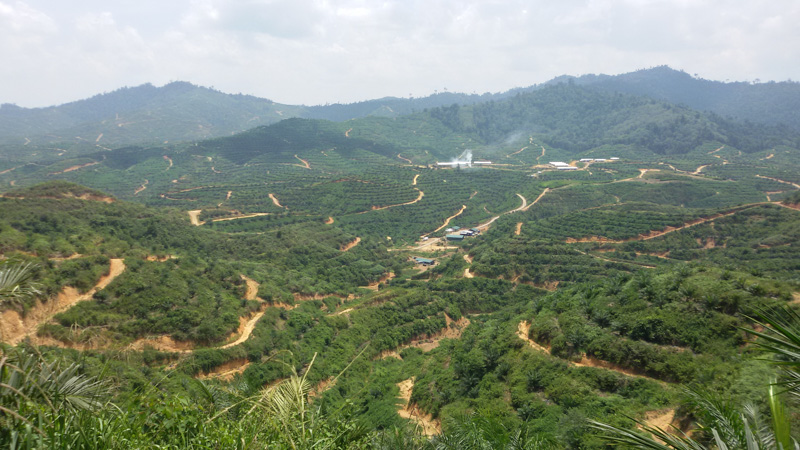 Sud-Kivu : La société civile environnementale annonce une marche de contestation de l'exploitation industrielle des minerais et hydrocarbures dans les aires protégées