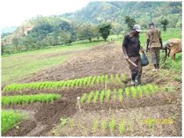 Sud-Kivu: Carence des légumes prévisible en décembre, alertent les agriculteurs de Kabare