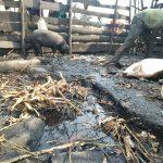 Bukavu: Insalubrité au marché Beach Muhanzi, les vendeurs optent pour la désobéissance fiscale